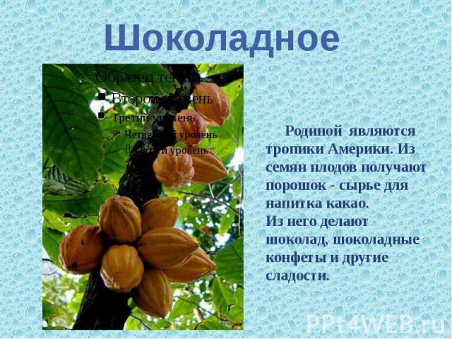 Шоколадное Родиной являются тропики Америки. Из семян плодов получают порошок - сырье для напитка какао. Из него делают шоколад, шоколадные конфеты и другие сладости.