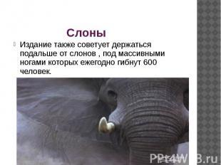 Слоны Издание также советует держаться подальше от слонов , под массивными ногам