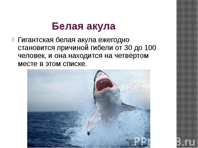 Белая акула Гигантская белая акула ежегодно становится причиной гибели от 30 до 100 человек, и она находится на четвёртом месте в этом списке.