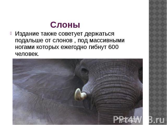 Слоны Издание также советует держаться подальше от слонов , под массивными ногами которых ежегодно гибнут 600 человек.