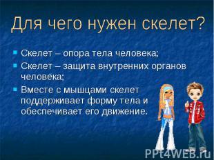 Скелет – опора тела человека; Скелет – опора тела человека; Скелет – защита внут