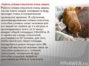 Работа собаки-спасателя очень важна Работа собаки-спасателя очень важна, так как