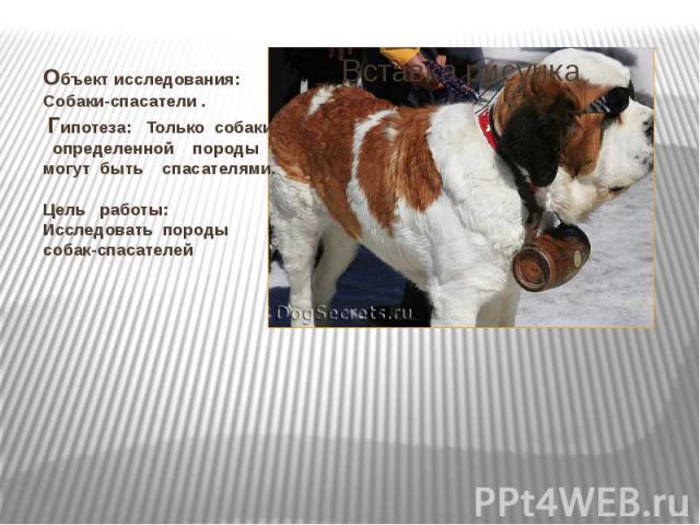 Объект исследования: Собаки-спасатели . Гипотеза: Только собаки определенной породы могут быть спасателями. Цель работы: Исследовать породы собак-спасателей