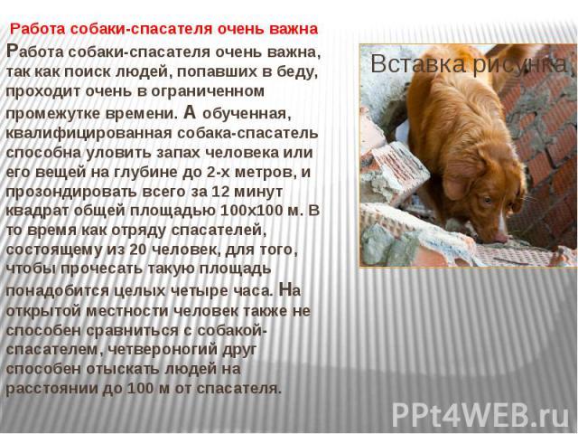 Работа собаки-спасателя очень важна Работа собаки-спасателя очень важна, так как поиск людей, попавших в беду, проходит очень в ограниченном промежутке времени. А обученная, квалифицированная собака-спасатель способна уловить запах человека или его …