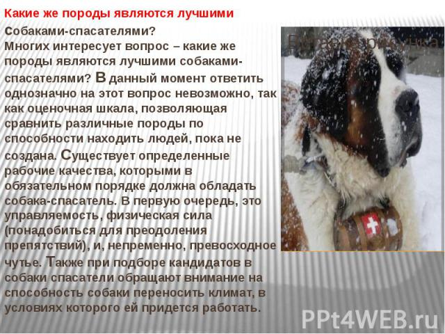 Какие же породы являются лучшими собаками-спасателями? Многих интересует вопрос – какие же породы являются лучшими собаками-спасателями? В данный момент ответить однозначно на этот вопрос невозможно, так как оценочная шкала, позволяющая сравнить раз…