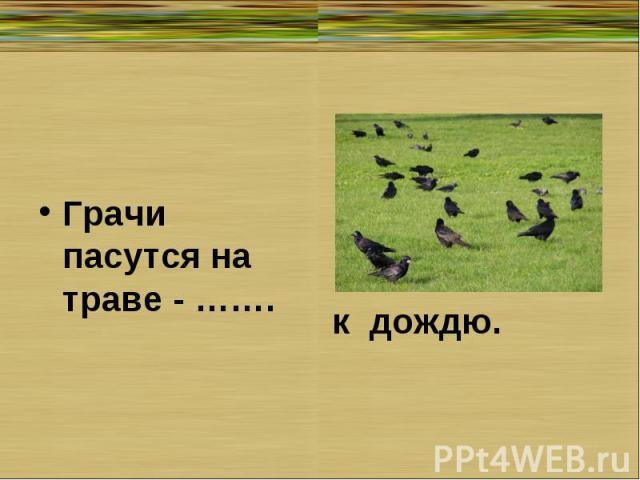 Грачи пасутся на траве - …….