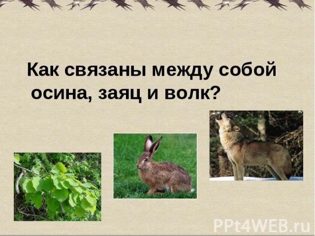Как связаны между собой осина, заяц и волк? Как связаны между собой осина, заяц и волк?