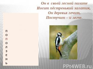Он в своей лесной палате Носит пёстренький халатик, Он деревья лечит, Постучит –