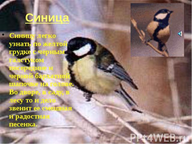 Синица Синицу легко узнать по желтой грудке с черным галстуком посередине и черной бархатной шапочке на голове. Во дворе, в саду, в лесу то и дело звенит ее смешная и радостная песенка.