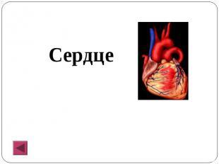 Сердце Сердце