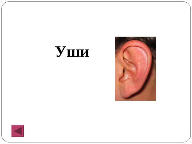 Уши Уши