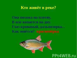 Кто живёт в реке?
