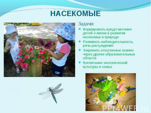 Задачи: Задачи: Формировать представления детей о жизни и развитии насекомых в п
