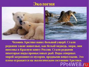 Экология Человек Арктике нанес большой ущерб. Стали редкими такие животные, как