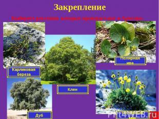 Закрепление Выберите растения, которые произрастают в Арктике.