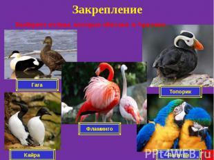 Закрепление Выберите птицы, которые обитают в Арктике.