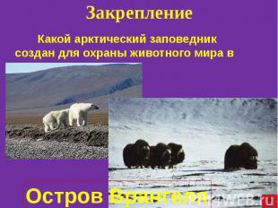 Какой арктический заповедник создан для охраны животного мира в России? Какой ар