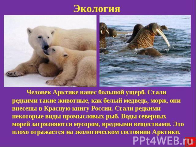 Экология Человек Арктике нанес большой ущерб. Стали редкими такие животные, как белый медведь, морж, они внесены в Красную книгу России. Стали редкими некоторые виды промысловых рыб. Воды северных морей загрязняются мусором, вредными веществами. Это…