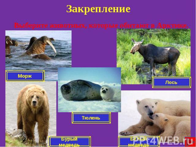 Закрепление Выберите животных, которые обитают в Арктике.