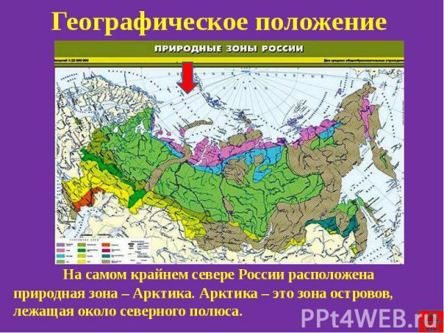 Географическое положение На самом крайнем севере России расположена природная зона – Арктика. Арктика – это зона островов, лежащая около северного полюса.