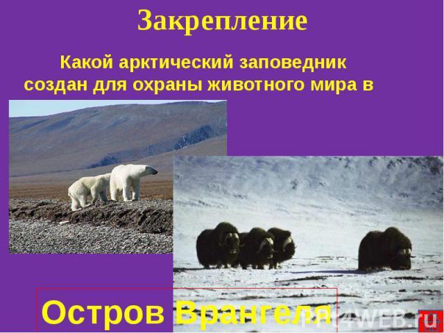 Какой арктический заповедник создан для охраны животного мира в России? Какой арктический заповедник создан для охраны животного мира в России?
