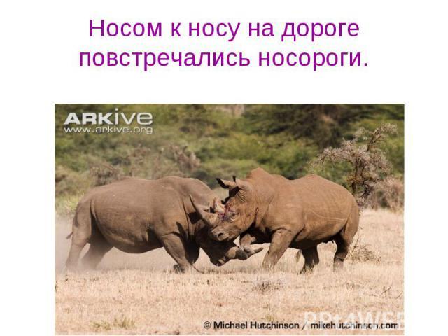 Носом к носу на дороге повстречались носороги.