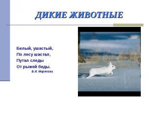 ДИКИЕ ЖИВОТНЫЕ Белый, ушастый, По лесу шастал, Путал следы От рыжей беды. В.И. М