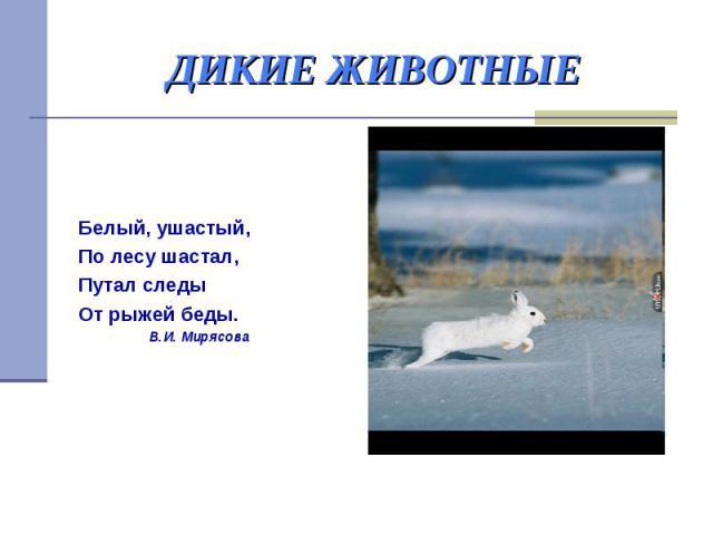 ДИКИЕ ЖИВОТНЫЕ Белый, ушастый, По лесу шастал, Путал следы От рыжей беды. В.И. Мирясова