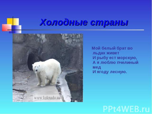 Холодные страны Мой белый брат во льдах живет И рыбу ест морскую, А я люблю пчелиный мед И ягоду лесную.