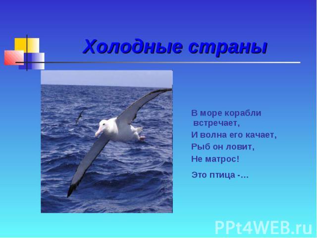 Холодные страны В море корабли встречает, И волна его качает, Рыб он ловит, Не матрос! Это птица -…
