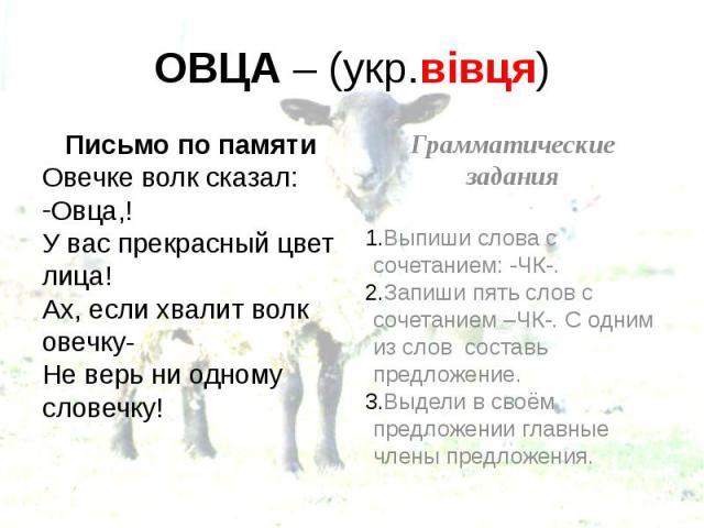 ОВЦА – (укр.вівця) Письмо по памяти Овечке волк сказал: Овца,! У вас прекрасный цвет лица! Ах, если хвалит волк овечку- Не верь ни одному словечку!