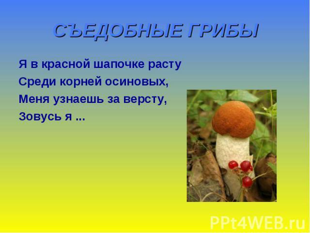 СЪЕДОБНЫЕ ГРИБЫ Я в красной шапочке расту Среди корней осиновых, Меня узнаешь за версту, Зовусь я ...