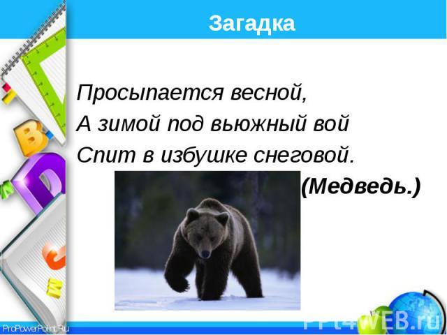 Загадка Просыпается весной, А зимой под вьюжный вой Спит в избушке снеговой. (Медведь.)