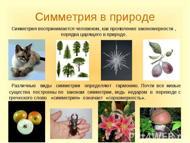 Различные виды симметрии определяют гармонию. Почти все живые существа построены по законам симметрии, ведь недаром в переводе с греческого слово «симметрия» означает «соразмерность». Различные виды симметрии определяют гармонию. Почти все живые сущ…
