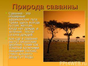 Саванна - это обширные африканские луга. Трава здесь всегда густая: желтая, когд