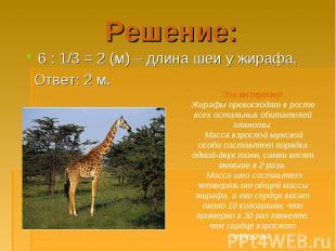 6 : 1/3 = 2 (м) – длина шеи у жирафа. 6 : 1/3 = 2 (м) – длина шеи у жирафа. Отве
