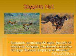 Скорость антилопы 80 км/ч. Это 2/3 от скорости гепарда. На сколько скорость гепа