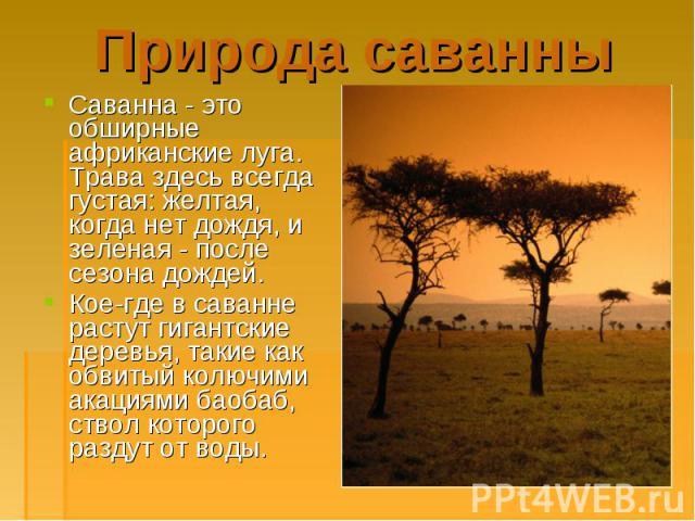 Саванна - это обширные африканские луга. Трава здесь всегда густая: желтая, когда нет дождя, и зеленая - после сезона дождей. Саванна - это обширные африканские луга. Трава здесь всегда густая: желтая, когда нет дождя, и зеленая - после сезона дожде…