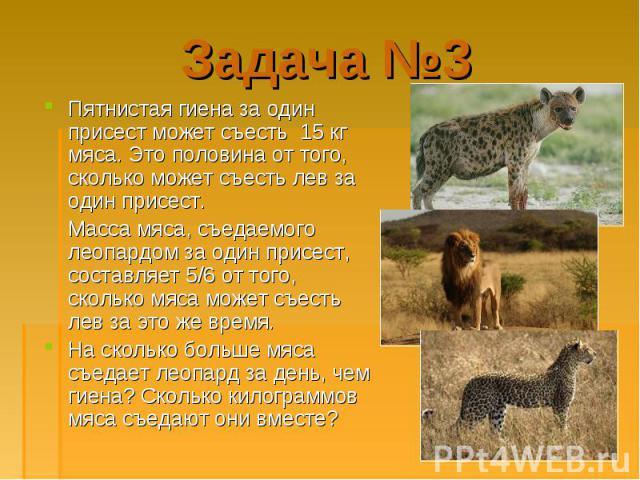 Пятнистая гиена за один присест может съесть 15 кг мяса. Это половина от того, сколько может съесть лев за один присест. Пятнистая гиена за один присест может съесть 15 кг мяса. Это половина от того, сколько может съесть лев за один присест. Масса м…