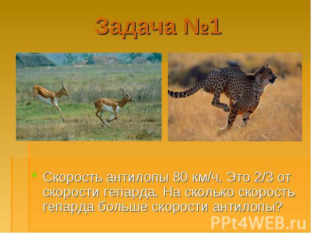 Скорость антилопы 80 км/ч. Это 2/3 от скорости гепарда. На сколько скорость гепарда больше скорости антилопы? Скорость антилопы 80 км/ч. Это 2/3 от скорости гепарда. На сколько скорость гепарда больше скорости антилопы?