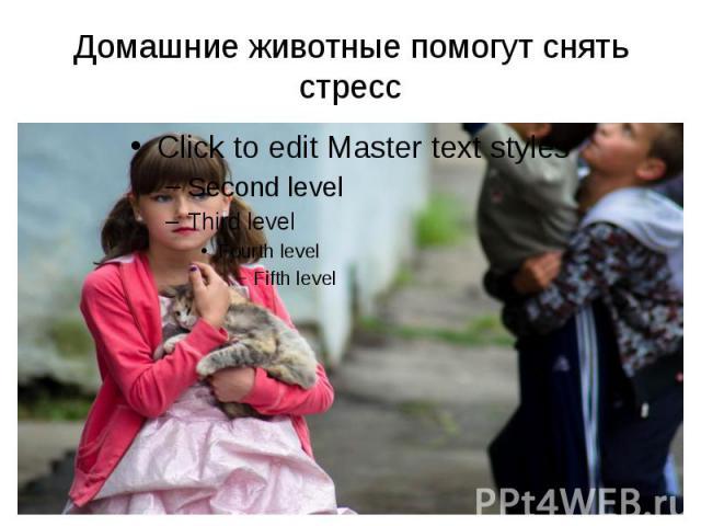Домашние животные помогут снять стресс