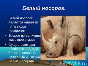 Белый носорог является одним из пяти видов носорогов Белый носорог является одни