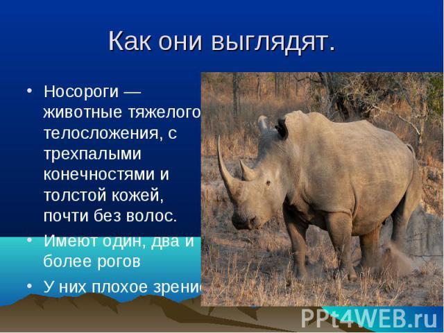 Носороги — животные тяжелого телосложения, с трехпалыми конечностями и толстой кожей, почти без волос. Носороги — животные тяжелого телосложения, с трехпалыми конечностями и толстой кожей, почти без волос. Имеют один, два и более рогов У них плохое зрение
