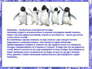 Пингвины - необычные и интересные птицы. Пингвины - необычные и интересные птицы