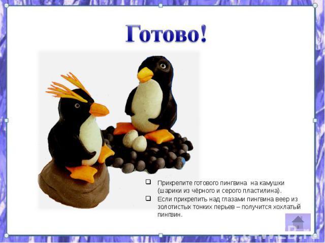 Прикрепите готового пингвина на камушки (шарики из чёрного и серого пластилина). Прикрепите готового пингвина на камушки (шарики из чёрного и серого пластилина). Если прикрепить над глазами пингвина веер из золотистых тонких перьев – получится хохла…
