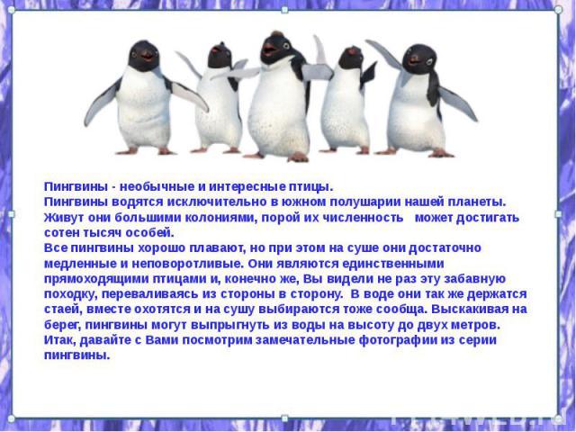 Пингвины - необычные и интересные птицы. Пингвины - необычные и интересные птицы. Пингвины водятся исключительно в южном полушарии нашей планеты. Живут они большими колониями, порой их численность может достигать сотен тысяч особей. Все пингвины хор…