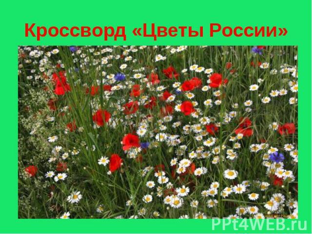 Кроссворд «Цветы России»