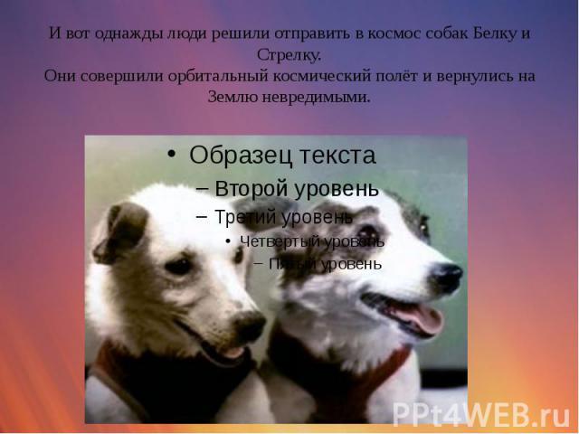 И вот однажды люди решили отправить в космос собак Белку и Стрелку. Они совершили орбитальный космический полёт и вернулись на Землю невредимыми.