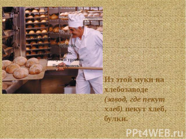 Из этой муки на хлебозаводе (завод, где пекут хлеб) пекут хлеб, булки. Из этой муки на хлебозаводе (завод, где пекут хлеб) пекут хлеб, булки.