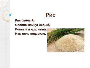 Рис Рис спелый, Словно жемчуг белый, Ровный и красивый, Нам поле подарило.